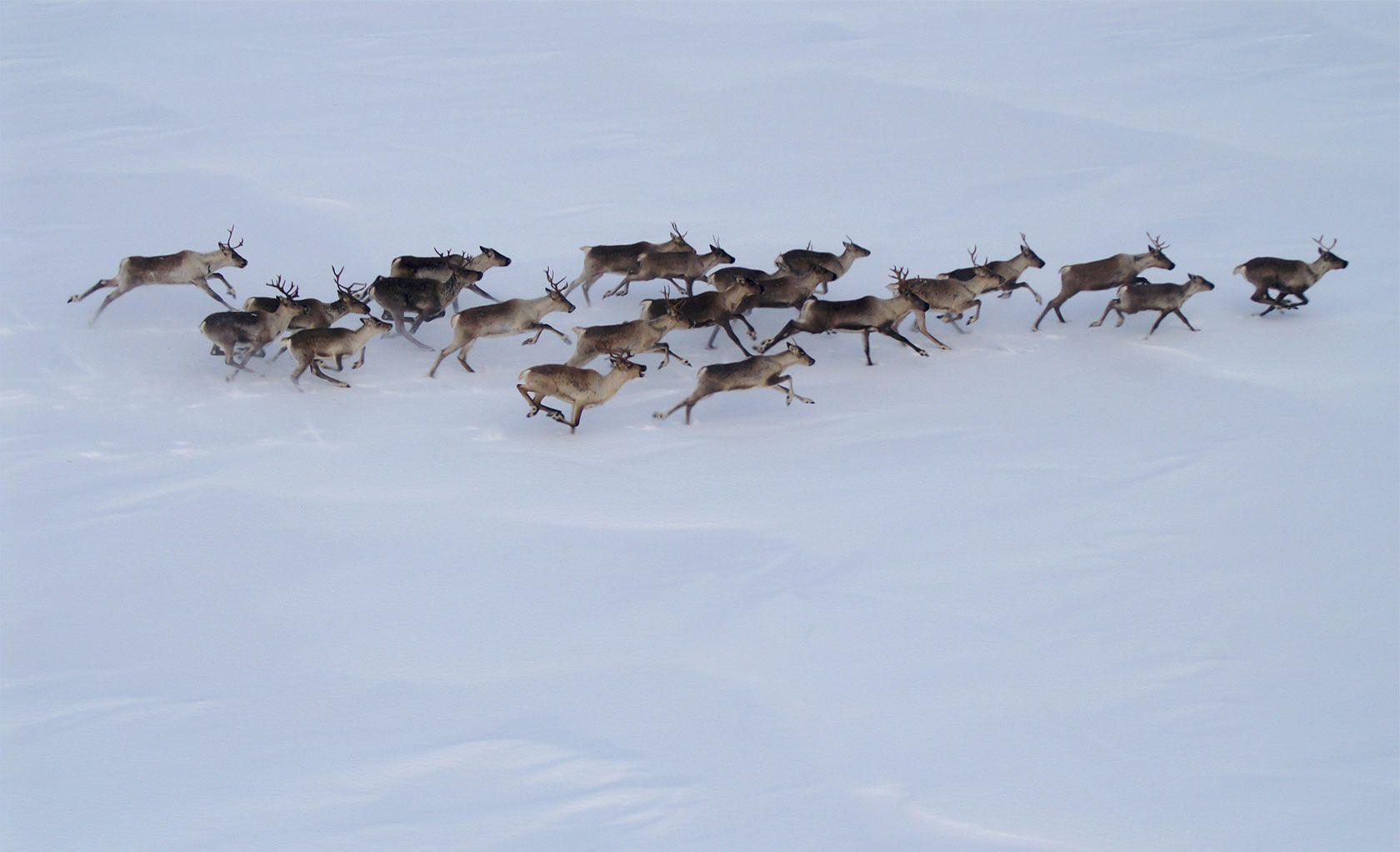 Karelia Joint Monitoring Committee Meeting